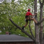 affordable tree services marietta ga