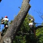 Best Tree Removal Kennesaw GA image