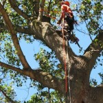 best tree service woodstock ga