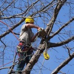 Tree Services Acworth GA image