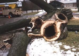 rotten tree removal marietta ga