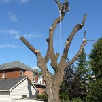 tree removal woodstock ga image