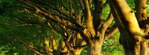 tree removal kennesaw ga slider