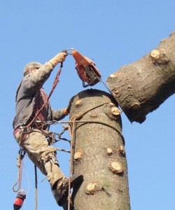 SCS Tree Removal In Action