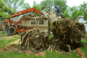 tree removal Roswell GA - SCS Trees