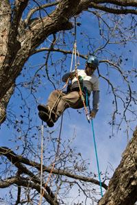 tree service Roswell GA Climber