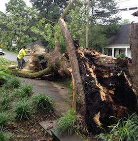best tree removal company in acworth ga
