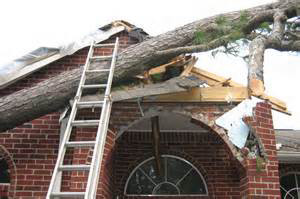 House destroyed by a fallen tree