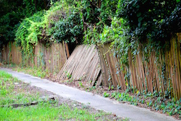 Ivy removal woodstock ga