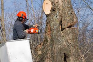Marietta-Tree-Company