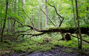 Tree Service in Marietta, GA