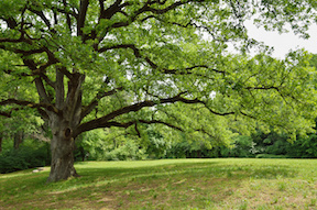 marietta-tree-service