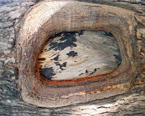 Marietta Tree Repair