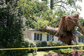How To Spot Tree Damage In Woodstock GA