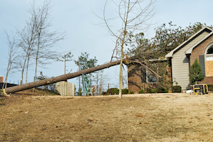 Tree Removal in Marietta, GA