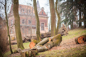 felled trees in the park
