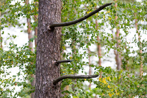 tree pruning tips by a professional tree service