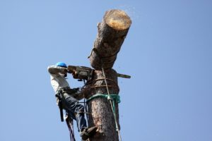 Top Reasons to Call a Tree Removal Service and Save Your Landscape
