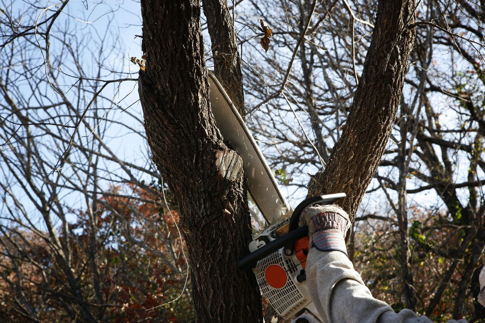 A Tree Service Firm in Marietta, GA Helps Spot and Remove Dying Trees