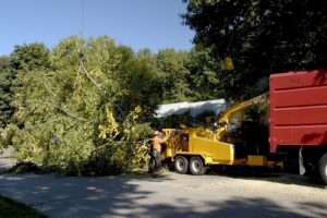 Learn about Common Tree Diseases and Avoid a Potential Tree Removal
