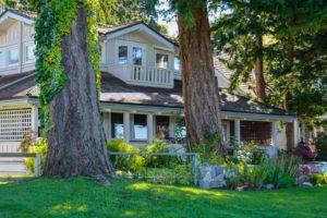 Expert Tree Service Company's Tactic in Recognizing Hazardous Trees