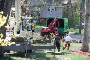 Tree Removal at the Appropriate Time Increases Homeowner Satisfaction