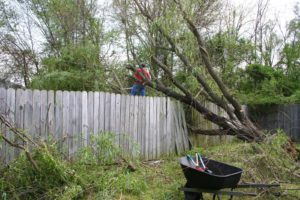 These Serious Tree Dangers Are Reasons Why You Need Tree Removal Now